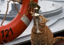 Минобороны России рассказало о коте, который участвовал в дальнем походе наших кораблей к берегам Сирии