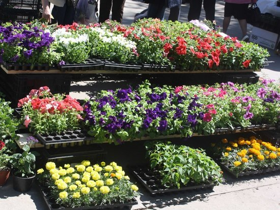 В тамбовском городском парке культуры и отдыха проходит Фестиваль цветов