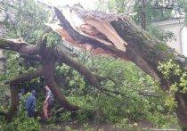 Как выжить во время урагана в городе: советы спасателя