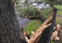 За ураган ответят чиновники «жилищника» и владельцы автобусной остановки