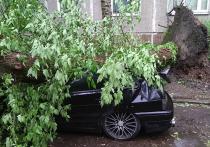 Машину повредило деревом в ураган: как получить компенсацию