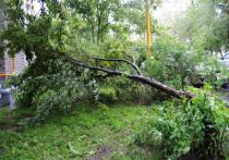 Стихия нанесла катастрофический ущерб старинным паркам и электрическим проводам