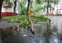 Ураган в Москве: теперь мы будем жить в другом климате