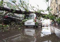 В МЧС объяснили отсутствие оповещения об урагане в Москве