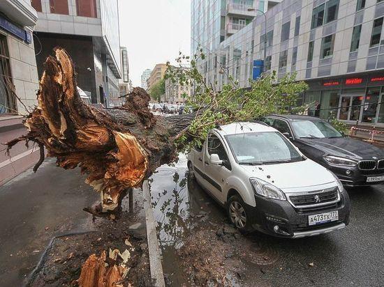 Надвигается новый ураган: как не попасть под дерево