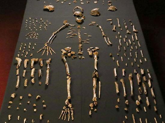 Homo Naledi: человек превращался обратно в обезьяну