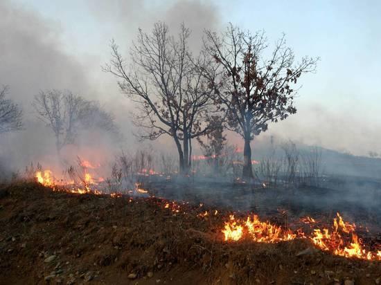 В МЧС определились, за какой пожар в лесу грозит уголовная ответственность