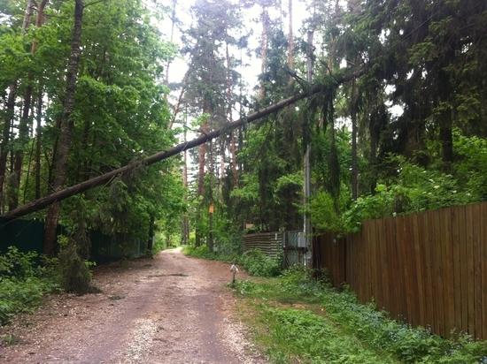 Дачников из Кратово сделали виноватыми в последствиях урагана