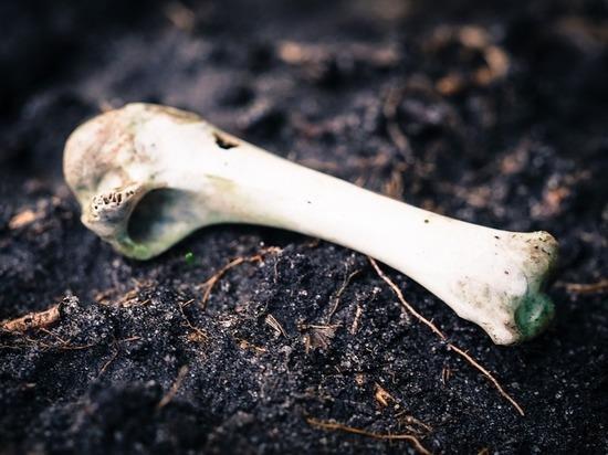 Раскрыта тайна костей, найденных среди морга: следователю объявлен выговор