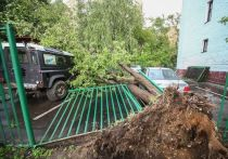 Число жертв урагана увеличилось до 16