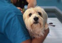 Ветеринары пришли в ужас от новых правил маркировки домашних животны