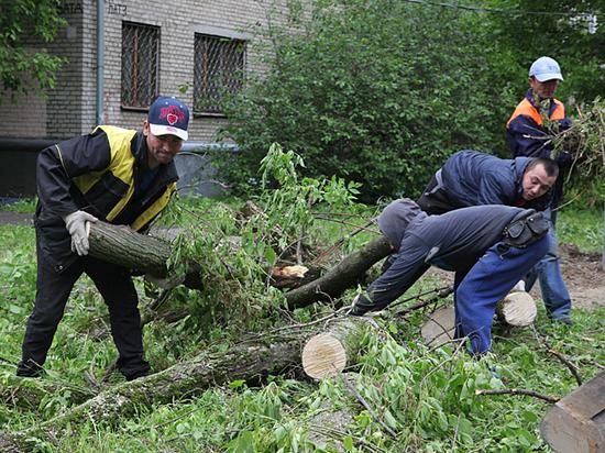 Упавшие деревья останутся на клумбах