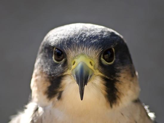 Ремонтные работы очень пугают птиц, которые любят гнездиться и выводить потомство на высотках