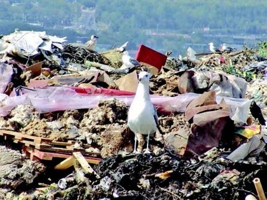 В Сочи с наступлением лета контейнеры переполнены бытовыми отходами