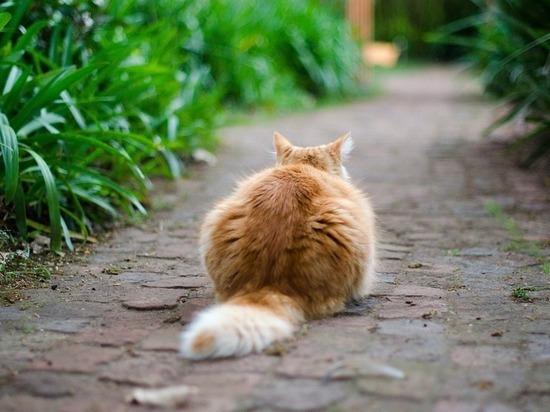 Его положение может многое рассказать о настроении кошки