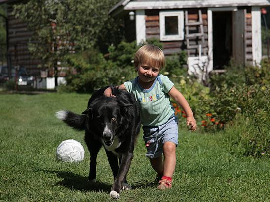 Собака на даче: чем развлечь детей и питомцев