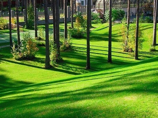 Благотворительный проект по озеленению Санкт-Петербурга