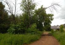 Сухие деревья на территории управления ЦРБ Серпухова угрожают прохожим