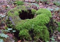 Изменить правила «лесной амнистии» призывают экологи и общественники