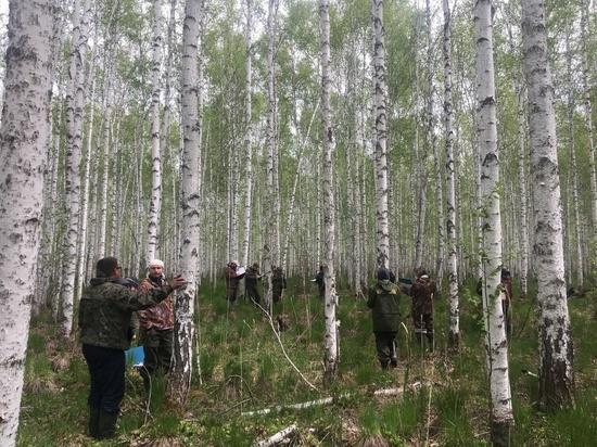 Лесам нужен уход и рациональное использование