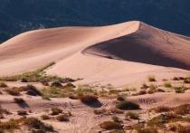Уже в ближайшее столетие засушливые регионы пустыни Сахара могут стать значительно более зелеными и дождливыми, если в результате глобального потепления температура на планете поднимется более чем на два градуса по шкале Цельсия