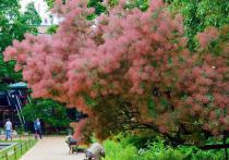 Один из старожилов «Аптекарского огорода» порадовал посетителей своим цветением