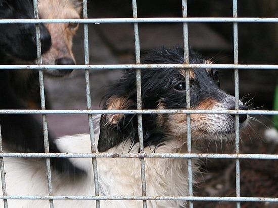 В борьбе за права животных люди дошли до мордобоя
