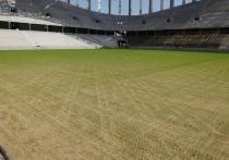 Газон зазеленел на «Стадионе Нижний Новгороде»
