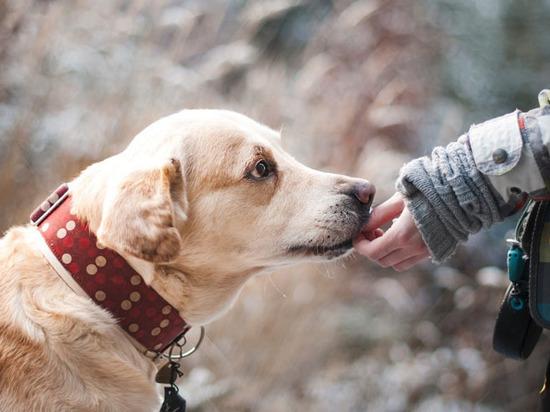 Ученые разобрались в эмоциях собак: