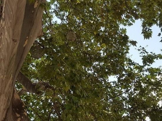 Прокуратура  Кубани два месяца добивается  от чиновников крайадминистрации соблюдения природоохранного закона