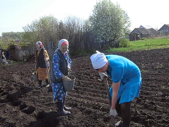 Граждане снова стали массово выращивать еду на дачах