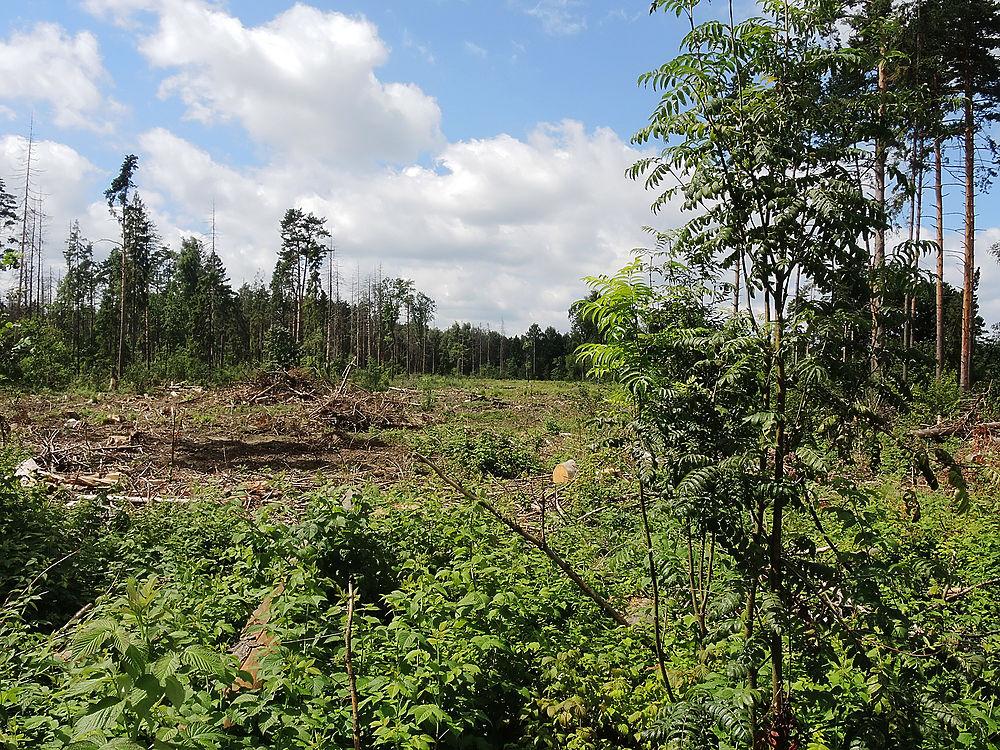 В Мытищах сражаются за спасение Челюскинского леса