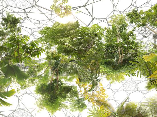 В Новой Третьяковке стартует биеннале из «Заоблачных лесов»