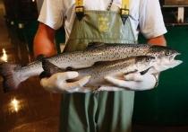 Трансгенную рыбу допустили в продажу спустя 25 лет после битвы биоинженеров с медиками