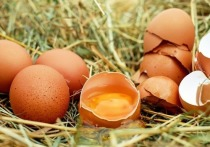 В Европе — паника: все отказываются от куриных яиц голландского производства, которые могут быть заражены фипронилом