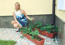 Волочкова посадила петрушку: