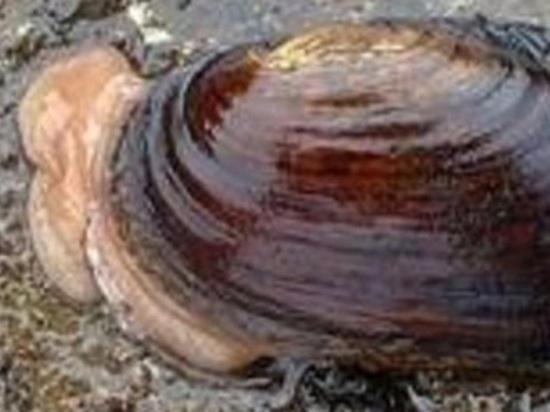 Специалисты САФУ, гоняясь по Аляске за моллюсками, сделали мировое открытие