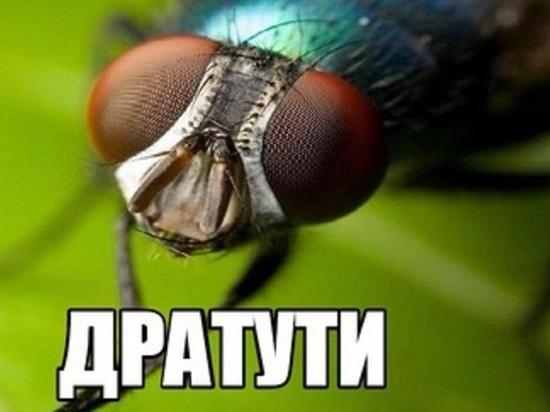 """""""Сколково""""нашло себя: инновационный центр всерьез заинтересовался архангельскими мухами"""