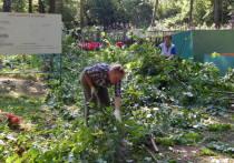 Устав ждать положенного им по закону благоустройства, жители деревни Каргашино Серпуховского района вышли на субботник и самостоятельно очистили кладбище от лесных зарослей