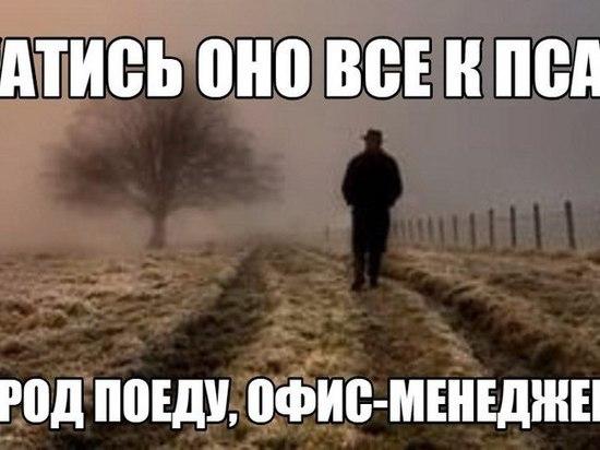 Холмогорский фермер вырастил бурьян и спихнул на местные власти
