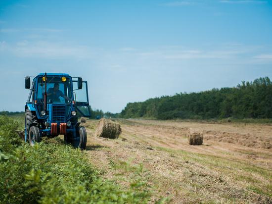 Губернаторская тыква, кабаксон и патичок: чем живут молодые астраханские фермеры?