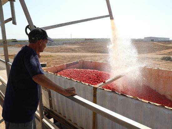 Волгоградские помидоры будут востребованы на российском рынке
