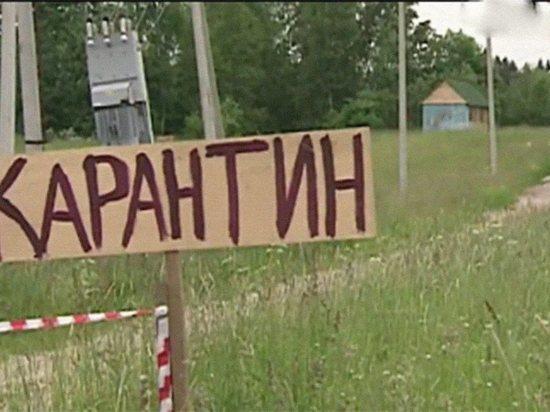 Карантин из-за бешенства введен в одном из районов Калужской области