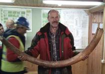 «Засекреченный» бивень мамонта все же передали московским археологам