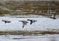 Проверять охотников на адекватность и знания о фауне собирается Минприроды
