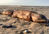 Необычное существо, напоминающее чудовище из фильма «Дрожь земли», выбросил на техасский берег Атлантический океан