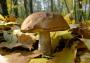 Симптомы отправления сезонными грибами: первая помощь, возможные последствия