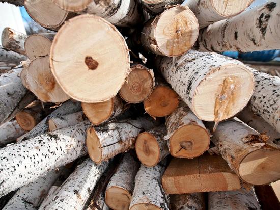 В Белоярке «потерялись» десятки тысяч кубометров леса