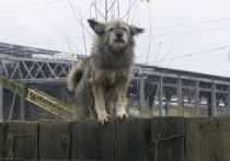 Новая должность - уполномоченный по правам животных - может появиться в России
