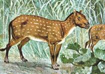 У древних лошадей было до четырех пальцев, которые они потеряли по мере увеличения своих размеров и необходимости быстро передвигаться